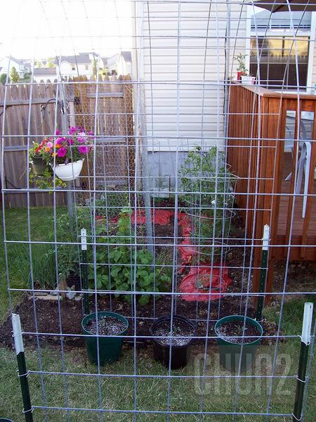 รูป 2 ไอเดียปลูกผักสวนครัว หลังบ้าน