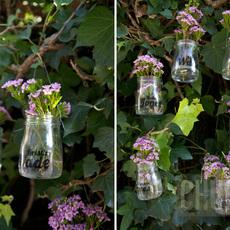 ทำกระถางดอกไม้ จากโหลแก้ว