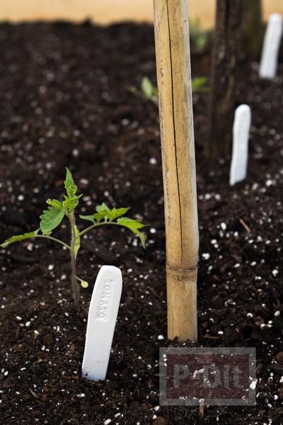 รูป 2 ทำป้ายชื่อต้นไม้ จากดินน้ำมัน