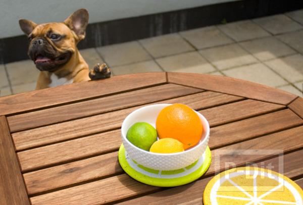 รูป 5 จานรองชาม ตกแต่ง ลายกลีบส้ม