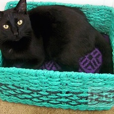 ตะกร้าแมว พ่นสี รองเสื้อไหมพรม