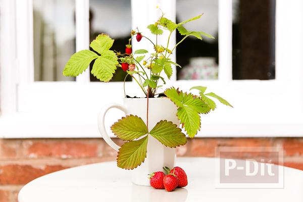 รูป 2 แจกันดอกไม้ประดับบ้าน ทำจากผลไม้