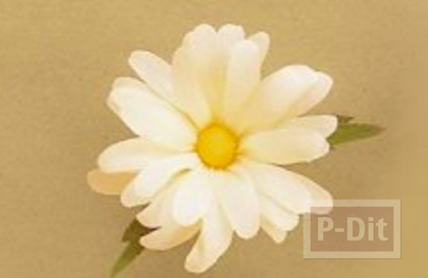 ดอกไม้กระดาษ ดอกแอสเตอร์