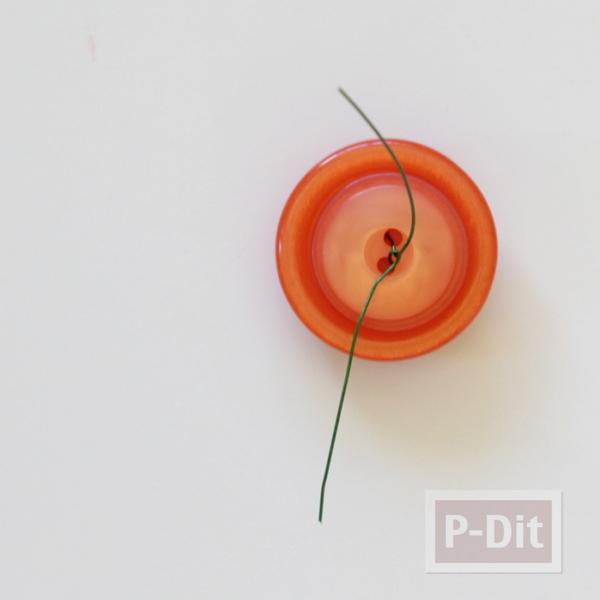รูป 6 ฟักทองกระดุม สีส้มสวยๆ