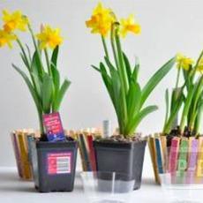แจกันดอกไม้สวยๆ ทำจากถ้วยพลาสติกหนีบไม้หนีบสวยๆ
