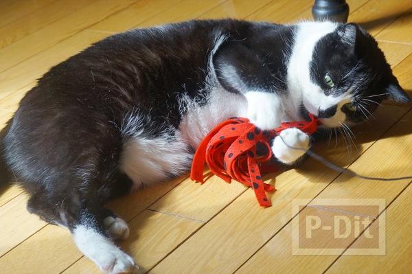 รูป 1 สอนทำของเล่นแมว แบบง่ายๆ