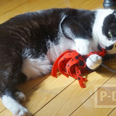 สอนทำของเล่นแมว แบบง่ายๆ