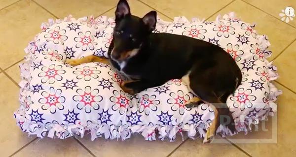 รูป 1 ทำที่นอนสุนัข จากหมอนเก่า หุ้มปลอกหมอนใหม่