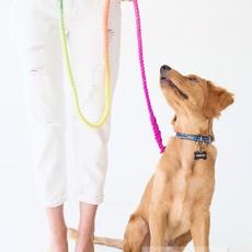 สายจูงหมาสีสดใส ย้อมสี