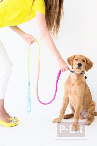 รูป 4 สายจูงหมาสีสดใส ย้อมสี