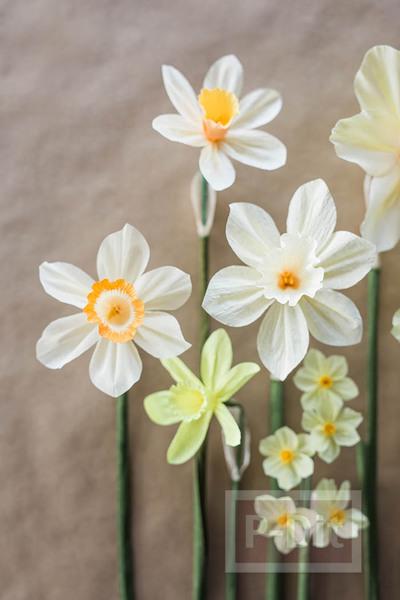 รูป 7 สอนทำดอกไม้กระดาษ ดอกดารารัตน์(Daffodil)