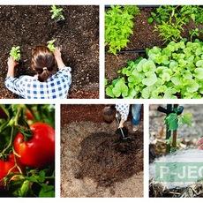 วิธีปลูกผัก สวนหลังบ้าน