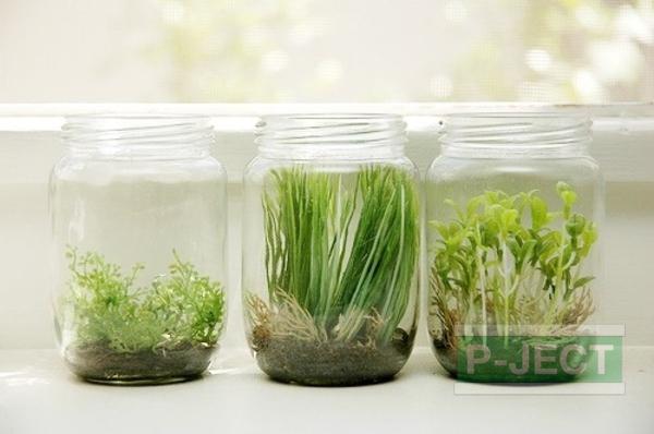 ปลูกต้นไม้ในขวดแก้ว สะอาด