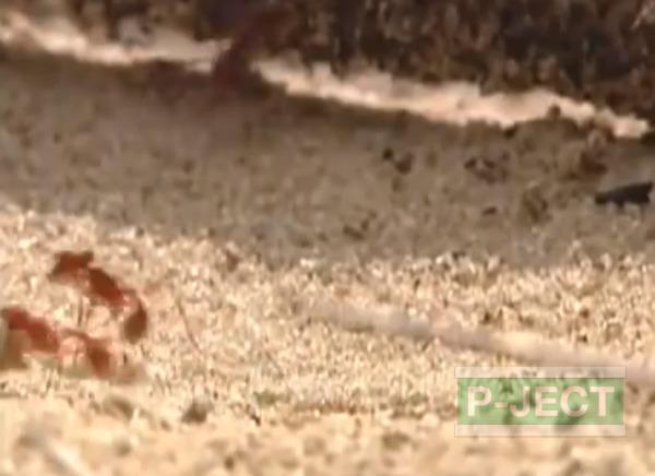 รูป 2 รังมดใต้ดิน หลอมจากอะลูมิเนียมเหลว
