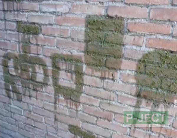 รูป 5 ตกแต่งกำแพงบ้าน ด้วยมอสผสมนม…