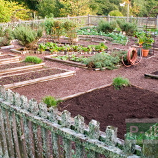 สวนผัก ออกแบบแปลงผักแบบง่ายๆ