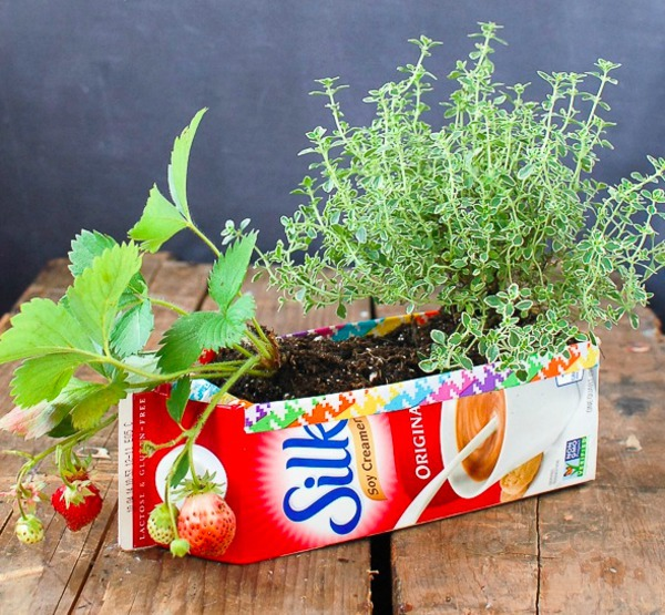 ปลูกผัก ผลไม้ จากกล่องนม กล่องน้ำผลไม้ เก่าๆ