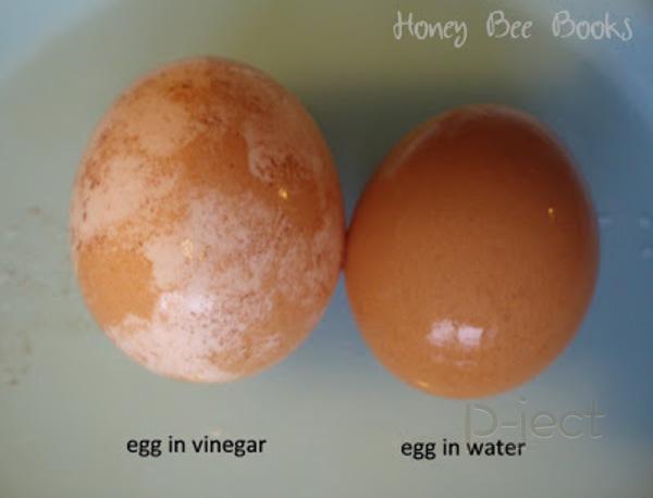 รูป 4 ทดลองวิทยาศาสตร์แบบง่ายๆ แช่ไข่ในน้ำส้มสายชู