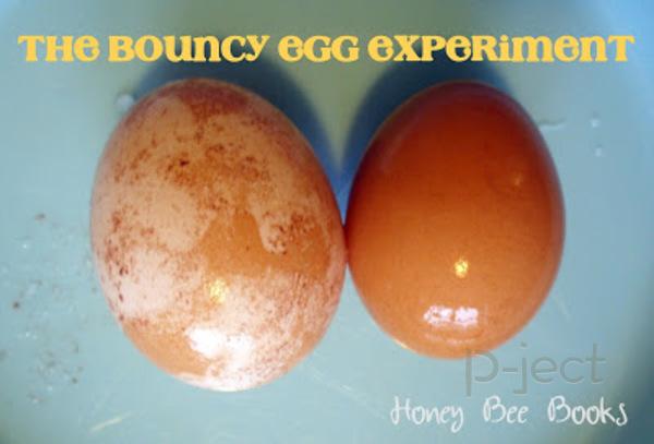 รูป 7 ทดลองวิทยาศาสตร์แบบง่ายๆ แช่ไข่ในน้ำส้มสายชู