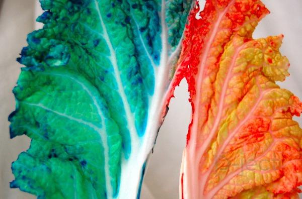 รูป 2 ย้อมสีผัก ด้วยสีผสมอาหาร