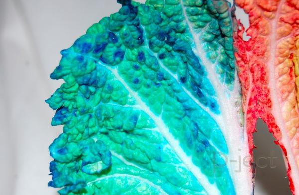 รูป 4 ย้อมสีผัก ด้วยสีผสมอาหาร