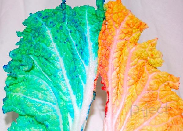 รูป 5 ย้อมสีผัก ด้วยสีผสมอาหาร