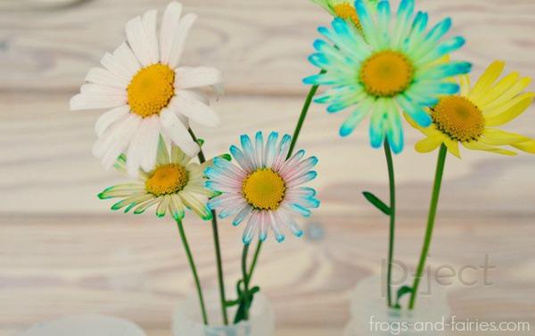 สื่อการสอนสนุกๆ ดอกไม้เปลี่ยนสี