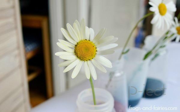 รูป 4 สื่อการสอนสนุกๆ ดอกไม้เปลี่ยนสี