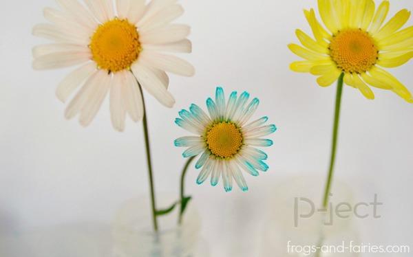 รูป 5 สื่อการสอนสนุกๆ ดอกไม้เปลี่ยนสี