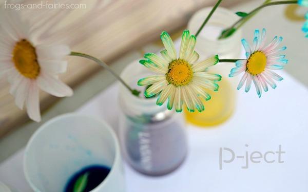 รูป 6 สื่อการสอนสนุกๆ ดอกไม้เปลี่ยนสี