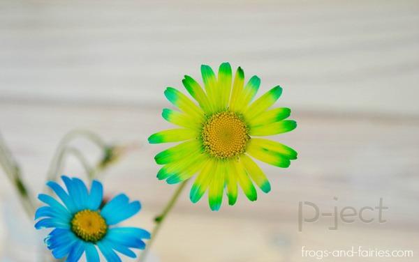 รูป 7 สื่อการสอนสนุกๆ ดอกไม้เปลี่ยนสี