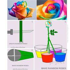 ดอกกุหลาบสีรุ้ง ทดลองวิทย์ สนุกๆ