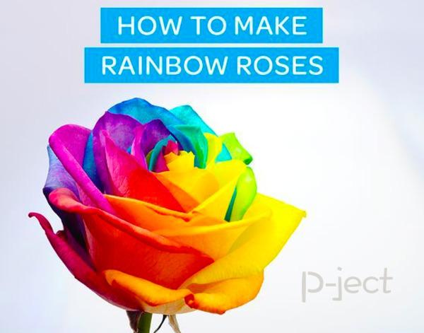 รูป 2 เปลี่ยนสีดอกกุหลาบ หลากสี จากสีผสมอาหาร